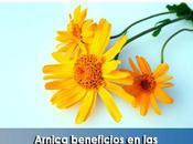 Artricenter: Arnica beneficios enfermedades reumáticas
