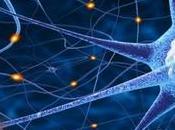 Neurociencia: estudia implicación psicología
