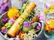 ¿Qué para sirven plantas medicinales?