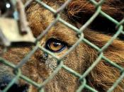circos deben tener animales