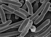 ¿¿Escheri qué?? Escherichia coli