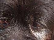 URGENTE!! Tiene salir viernes sacrifican! TRUC viejito cariñoso grave dermatitis perrera Reus ¡SACRIFICAN!