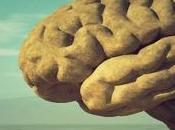 Partes cerebro funciones características