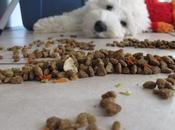 Conoce mejores alimentos para perros raza pequeña