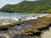 Cartagena Indias: principales atracciones turísticas