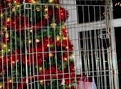 Protegiendo árbol navideño garras nuestros gatos