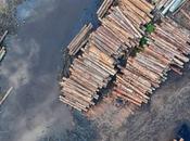 deforestación estrecha relación calentamiento planeta. cambio climático