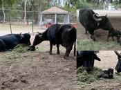 Nace Búfalo agua Parque Tangamanga buscan nombre