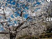 CONCURSO: 800€ para mejor cartel Cerezo Flor