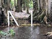 cuestiona Ministro ambiente destrucción refugio vida silvestre Gandoca Manzanillo