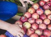Ferias productos orgánicos