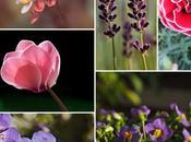 Plantas flores todo