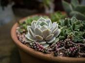 propio sustrato para plantas ahorra mucho dinero