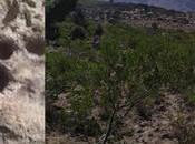 Encuentran huellas puma Cañada Lobo, donde quieren fraccionar