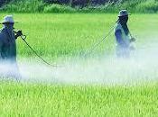 Insecticidas efectos medio ambiente, información aquí