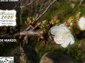 Primeras Flores Valle Jerte