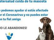 Vetersalud habilita fondo gratuito para atención mascotas