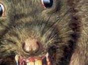 ¿Ratas practicando canibalismo?