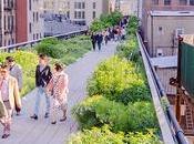 Oasis Vitrinas: caras espacio público Nueva York