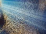animales sexto sentido, profetas catástrofes naturales