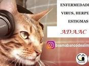 Enfermedades, estigmas gatos ADAAC