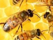 marco Mundial Abejas piden potosinos cuidar estos insectos