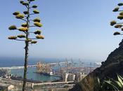 Mirador alcalde Montaña Montjuïc