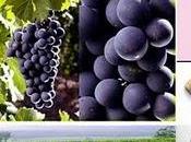 SERIES Vino Cabernet Sauvignon