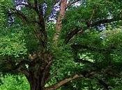 árbol sabía quién era: Fábula