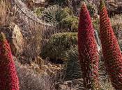 Tajinastes Rojos Fortaleza Parque Nacional Teide Tenerife