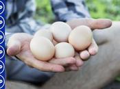 Huevos anticuerpos contra covid-19...