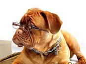 perros inteligentes mundo