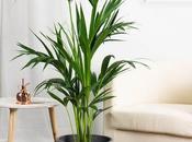 Ideas plantas para decorar hogar