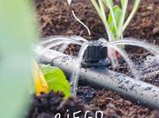 Cómo proteger huerto plantas calor verano