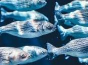 beneficios comer pescado cualquier época