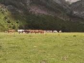 Habitantes valle