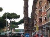 Árboles frente asfalto