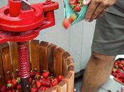 Elaborando cerveza fresas miel