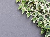 Plantas colgantes trepadoras para alegrar paredes