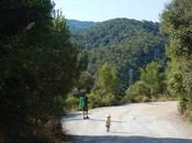 Floresta Baixador Vallvidrera Serra Collserola