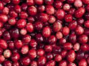 Arándano rojo. Propiedades, beneficios, usos contraindicaciones