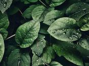 Reino plantae, reino vegetal plantas clasificación