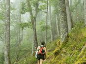 Muniellos, bosque Asturias