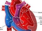 factor hereditario enfermedades cardiovasculares