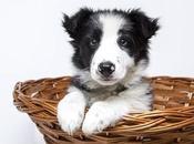 formas saber perro está triste molesto