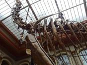 Jurassic Park Museo Historia Natural Berlín, viaje pasado.