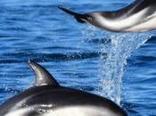Madryn verano Delfines