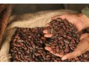 cacao puede estimular memoria personas mayores
