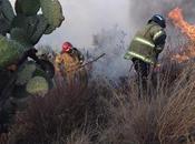 trabajo intermunicipal cuerpos bomberos permitió sofocar incendio purificación