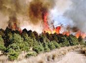 Atiende incendio forestal toluca